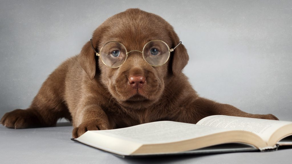 Top Books to Read about Dogs - Pet Supplies & Pet Store Online
