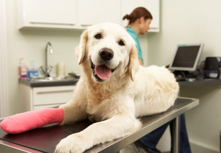 a dog with fractured bones needs a pet first aid kit